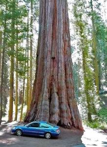 avtomobili-i-priroda